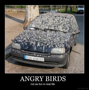 angry bird -not as fun in real life